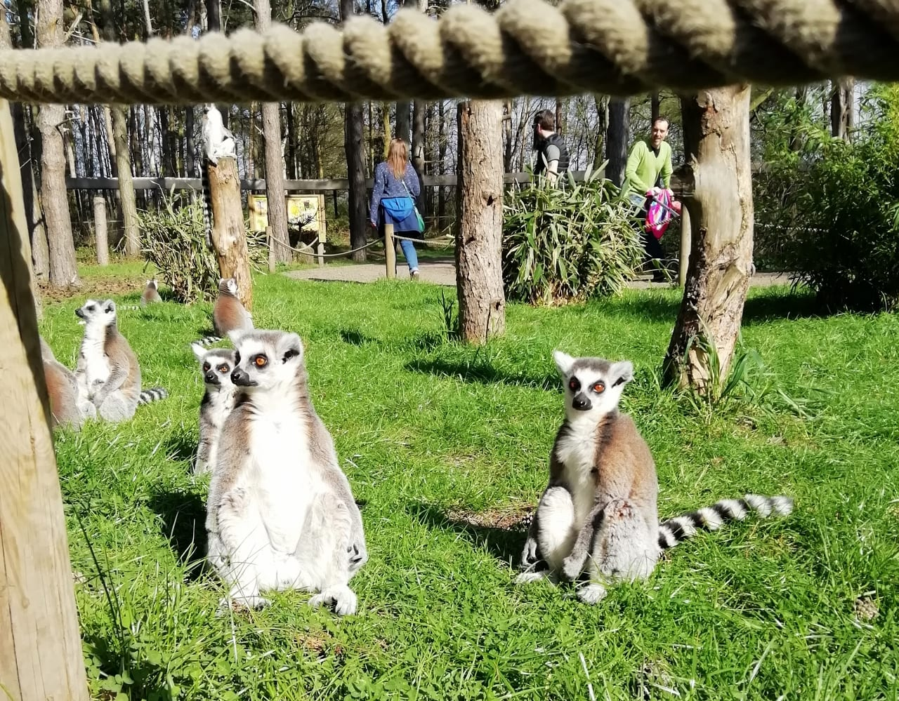 Up close with the animals at Yorkshire Wildlife Park